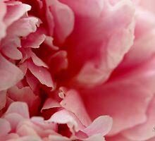 Pink Peony Perfume by Rosemary Sobiera