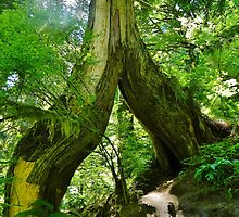 Giant in the Gorge by Randy Richards