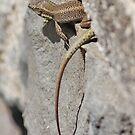 Wild Lizard by AnnDixon