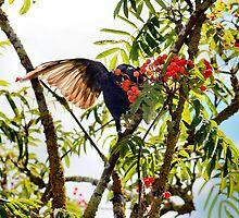 Tasty berries - image 2 of series 2 by missmoneypenny