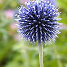 Globe Thistle by Linda  Makiej