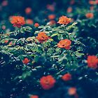 Moody Blooms by anniephoto