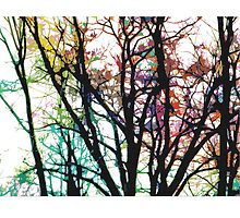 Rainbow Trees (light)  by KaySpike