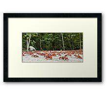 Red Crab Migration - The Journey Begins Framed Print