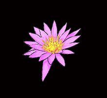 Pink Water Lily by LastLittleBird