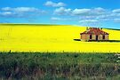 derelict house in canola fields, Burra 2 by Margaret  Hyde