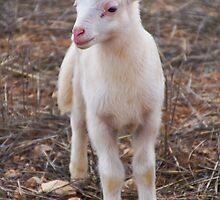 Little Lamb by ForeverFrodo