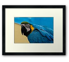 Blue-and-Gold Macaw Parrot Framed Print