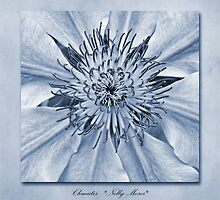 Clematis Nelly Moser Cyanotype by John Edwards