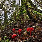 Tarkine Fungi by Kip Nunn