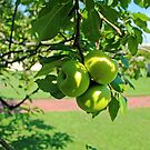 Green Apples by WeeZie