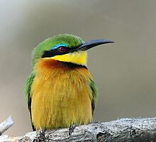 A Little Bee-Eater by jozi1