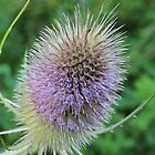A whistle for the thistle by karina5