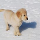"""""""Golden Retriever Puppy's First Winter"""" by Laurie Minor"""