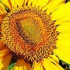 Sun Worshipper by WildestArt