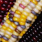 Indian Corn  by Laurie Minor