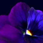 Pansy Purple - card by Rosemary Sobiera