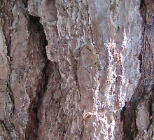 The bark is spreading its bark without good reason by PVagberg