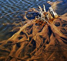 Submerged Roots by Laurie Minor