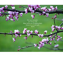 Blossoms Around You Photographic Print