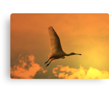 Spoonbill Stork - Sunset Flight of Color - African Wild Birds Canvas Print