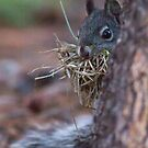 Shy squirrel by Anthony Brewer
