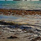 Shoalwater Bay by Chelsea McCann