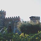 wine country by Santamariaa