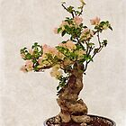 Bougainvillea bonsai by Celeste Mookherjee