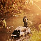 Duck Swimming Down Stream Sunshine by alyphoto
