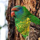Guarding the Nest by John Sharp