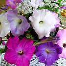 Colorful petunias by Ana Belaj