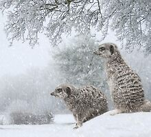 Meerkats in the Snow by JJ-Grafton