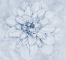 Floral Layers Cyanotype by John Edwards