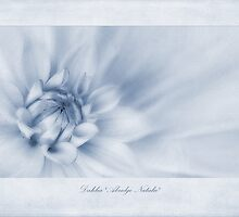 Dahlia 'Abridge Natalie' Cyanotype by John Edwards