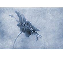 Faded beauty cyanotype Photographic Print