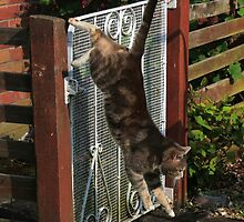 Tabby cat jumping from garden gate by turniptowers