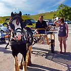 Horse And Cart At The Market, West Bay,Dorset UK by lynn carter