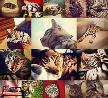 Poochies The Cat Collage by arcofclark