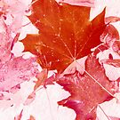Pink Autumn Leaves by Marie Van Schie