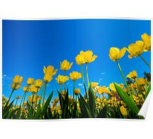 Tulip Tableaux Poster