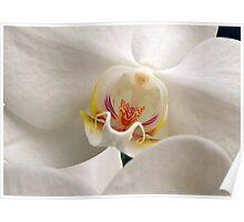 Soft Flower Poster
