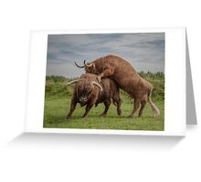 Highland Cows Greeting Card