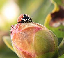 Bug on a bud by missmoneypenny