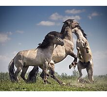 Dancing Horses Photographic Print