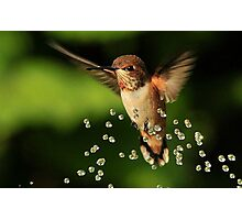 ..TINY BUBBLES....Rufous Hummingbird...by Marie Will Photographic Print