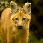 Maned Wolf by rosepetal2012