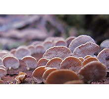 Little Ping-pong bat fungi Photographic Print