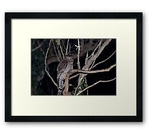 Powerful Owl Framed Print