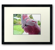 Yipeee! It's Going To Rain...Cockatoo - Rose Breasted/Galah - NZ Framed Print